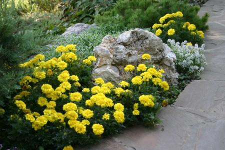 Клумбы непрерывного цветения