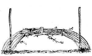 Кусты пригибаем и связываем
