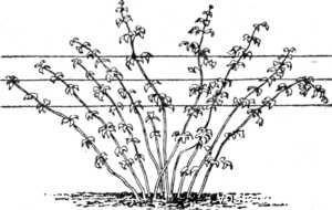 Подвязка шпалер