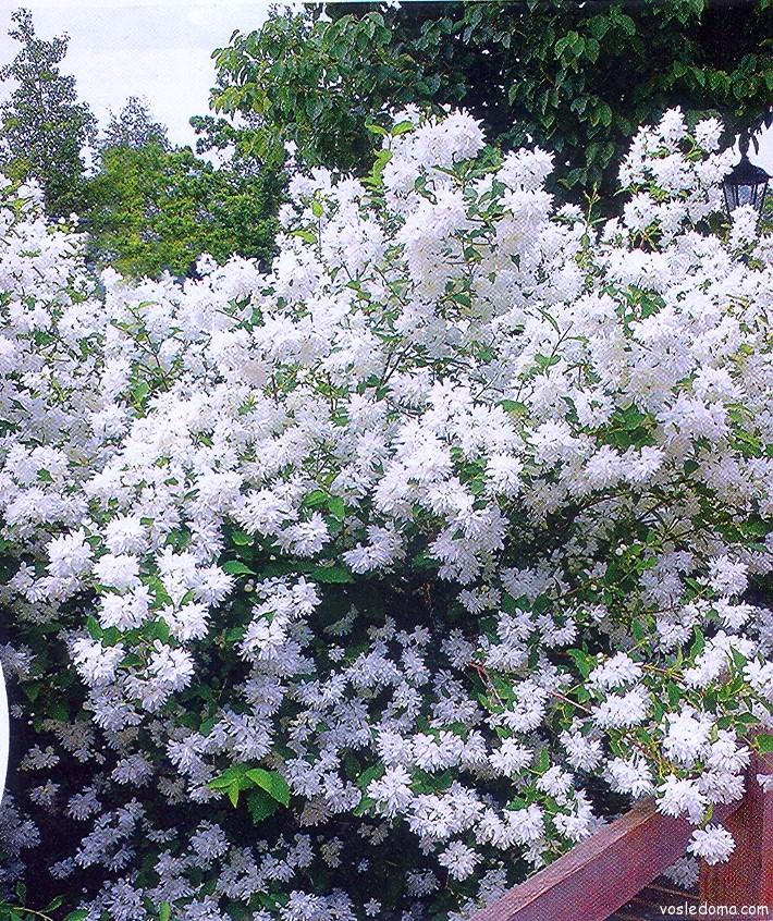 Правильно выбранное место, уход и результат - пышное цветение