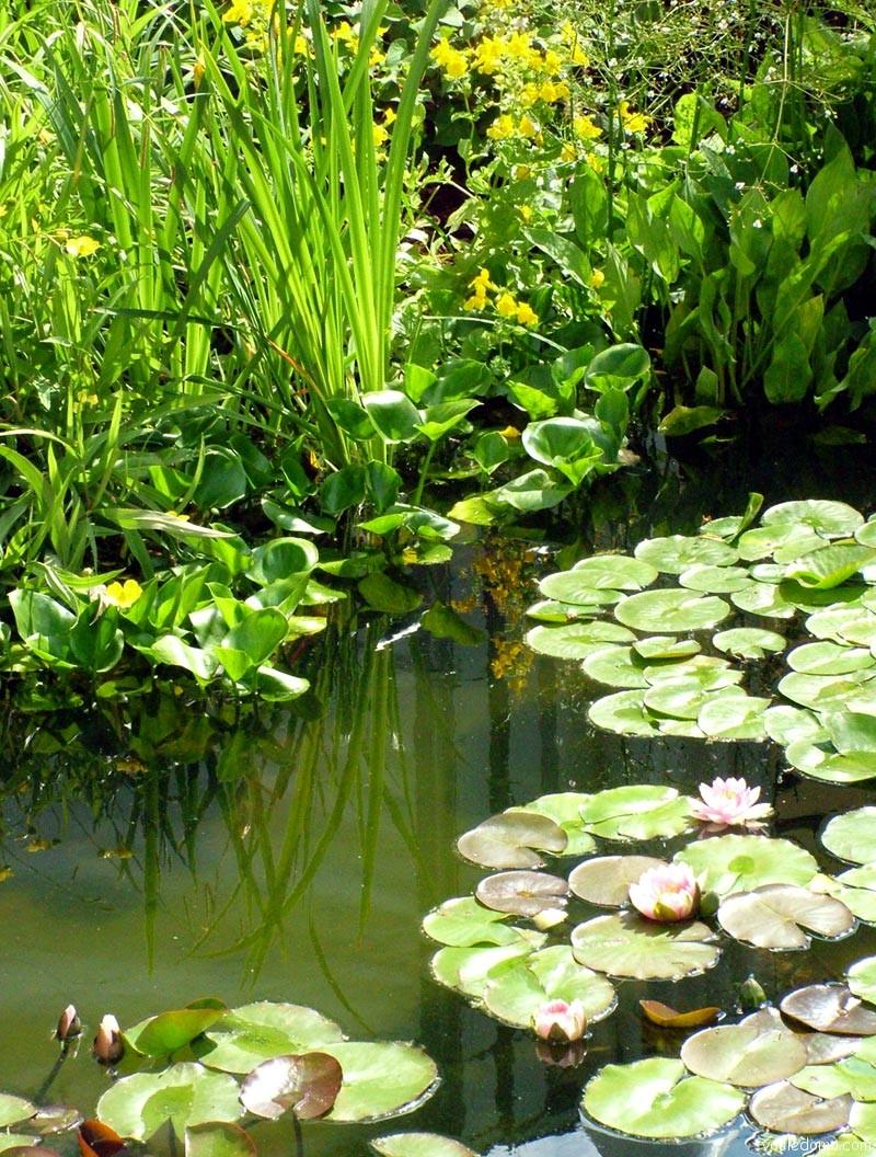 Сердечные гликозиды лекарственные растения фото туристы приезжают