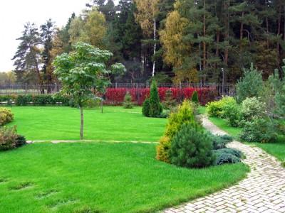 Травы для газонов