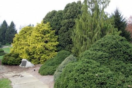 Как ухаживать за хвойными деревьями на своем участке