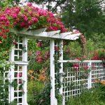 Преображаем сад используя метод вертикального озеленения