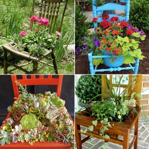planting-flowers-in-chairs