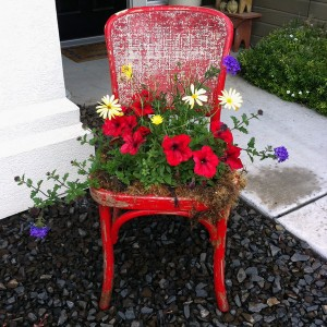 planting-flowers-in-chairs-colorful1
