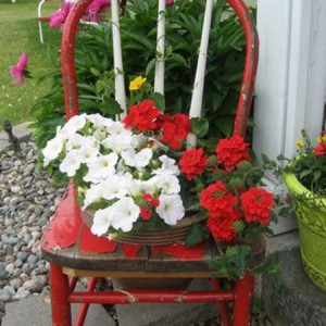 planting-flowers-in-chairs-colorful3