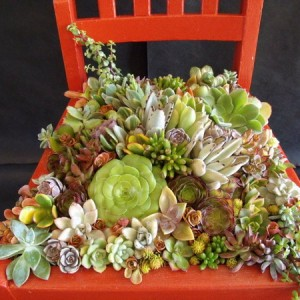 planting-flowers-in-chairs1-2