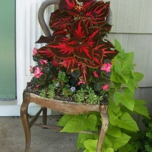 planting-flowers-in-chairs1-4