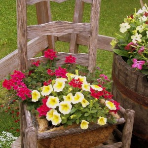 planting-flowers-in-chairs2-3