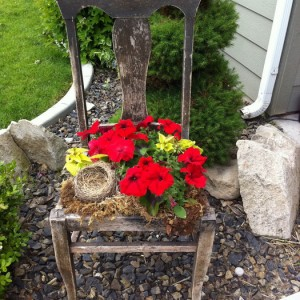 planting-flowers-in-chairs2-5