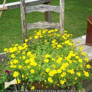 planting-flowers-in-chairs2-8