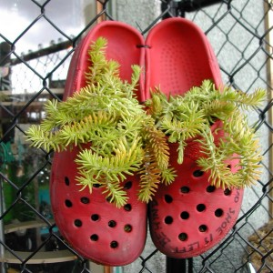 shoes-container-garden1-3