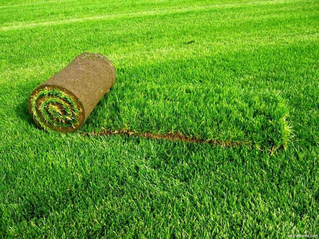 посадка рулонного газона