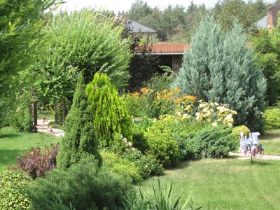 Основное украшение дачи – зеленые насаждения