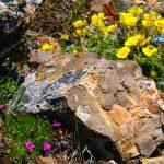 Красота контраста нежных цветов и фактурных камней
