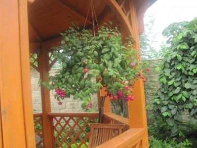 Поразительная красота и значительная польза вертикального озеленения