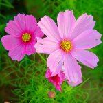 Наиболее популярные цветы в наших садах