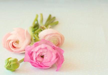 Ранункулюс – свадебный цветок невесты