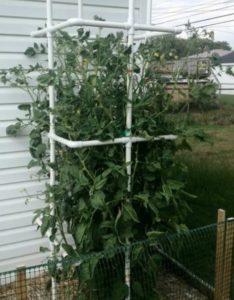каркас для растений