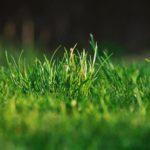 Основные правила ухода за газоном