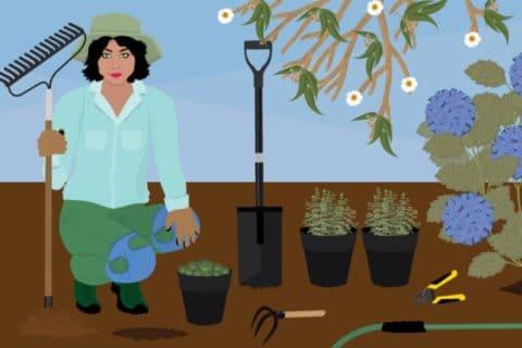Необходимые инструменты для садовода
