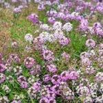 Как бороться с вредителями в саду: советы от экспертов