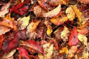 что делать с опавшими листьями