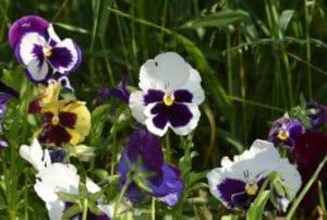 гербициды