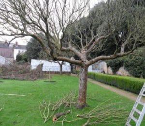 правильная обрезка омоложения деревьев