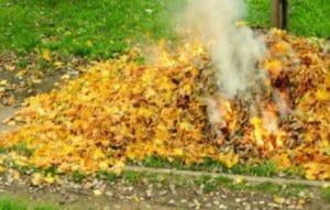 сожжение опавших листьев