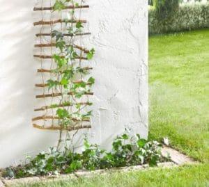 шпалера в саду